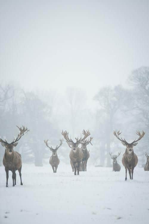 A beautiful scene of a herd of deer in the winter