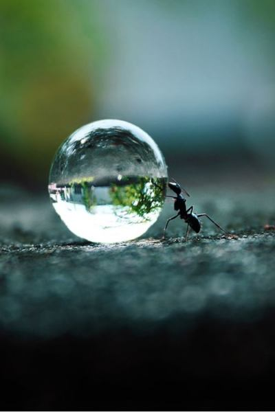 I'm using this Sisyphus Ant photo for Diggin' It 8